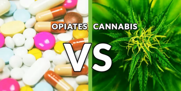Chronic Pain and Opioids, Why Big Pharma Hates Cannabis