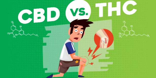 CBD vs THC For Pain Management – How Do They Differ?