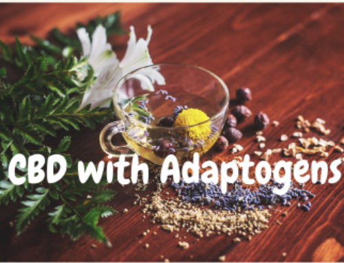 What's the Craze Behind Using CBD With Adaptogens?